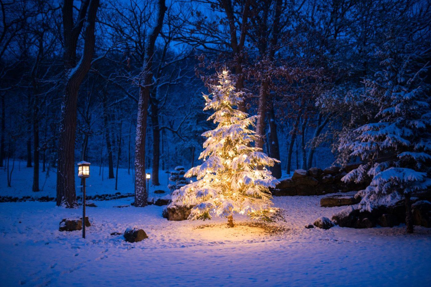 Pelo que você celebra o Natal?